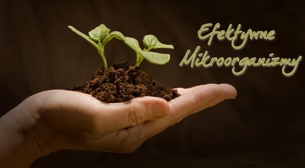 Dlaczego warto stosować Pożyteczne Mikroorganizmy  ProBio Emy®?