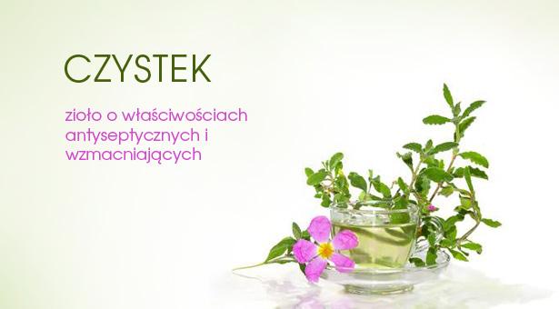 Czystek - polifenole wspomagające odporność