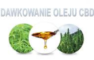 Jak dawkować olej z CBD?