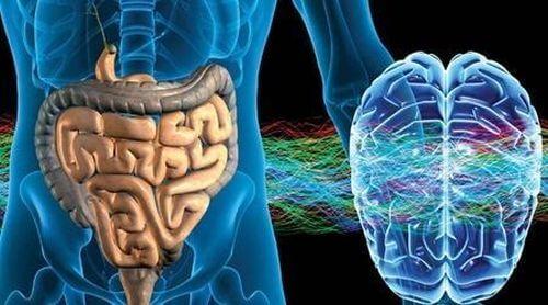 Przeszczep mikroflory jelitowej ma potencjał do odwracania procesu starzenia się mózgu!